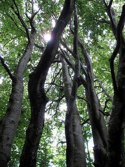Tree, Uplight, Forest, Trunk, Nature, Wood Bark