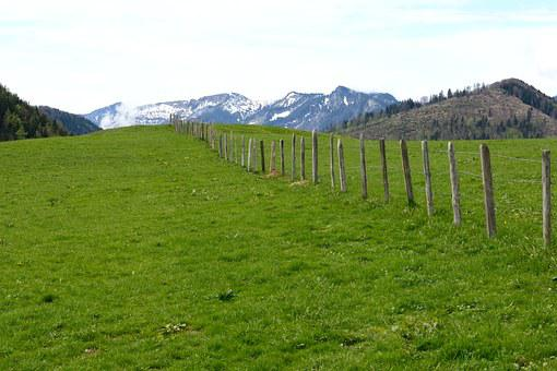 Demarcation, Barbed Wire, Fence, Meadow, Nature