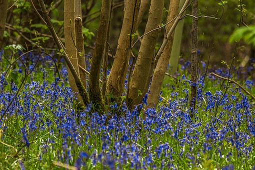Matejko, Forest, Nature, Spring