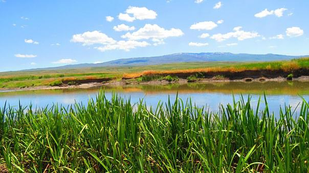 Reedy, Spring, River, Tea, Erzurum, Nature, Landscape