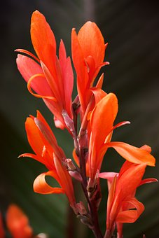 Bloom, Blossom, Botany, Flower, Nature, Petal, Plant