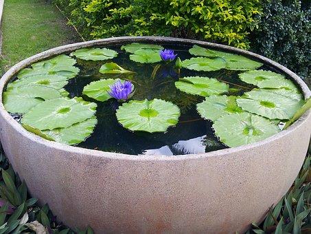Lily, Park Vase, Purple, Flower, Leaves, Summer, Nature