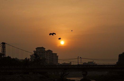 Sunrise, Birds, Yello, Sun, Sunset, Nature, Silhouette