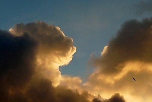 Clouds, Storm Clouds, Sunset, Sky, Bird, Seagull