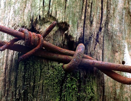 Wood, Oxide, Nails, Barbed Wire