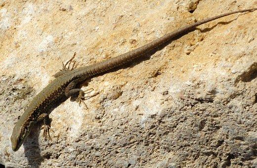 Lizard, Stone, Reptile, Armor, Animals, Reptiles