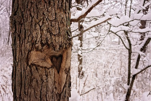 Love, Tree, Brown, Nature, Winter, Beauty, Snow