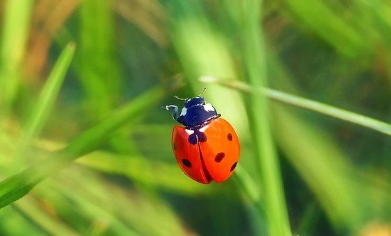 To The Left Please, Ladybug, Lucky Ladybug, Lucky Charm