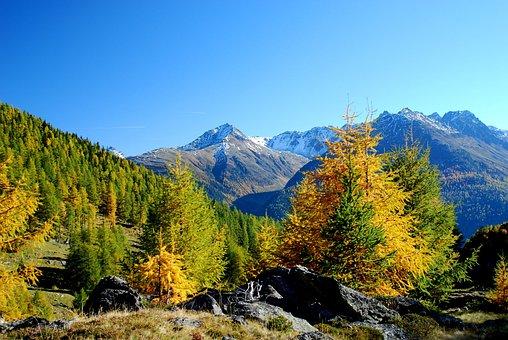 Mountain Panorama, Larch, Autumn, Blue Sky, Engadin