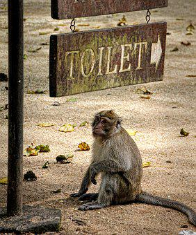 Monkey, Thailand, Makake, Nature, Asia, Primate, Sweet