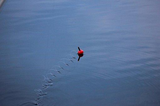 Hook And Line, Ongenkoho, Lake, Summer, Angler