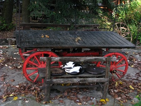 Table, Cat, Autumn, Colorful, Cart, Push Cart, Trolley