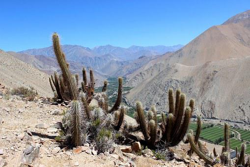 Mountain, Chile, Paihuano, Cactus
