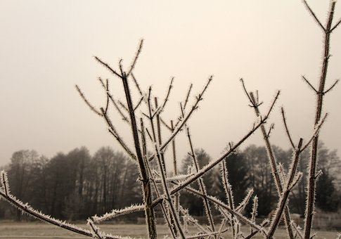Frozen, Frost, Iced, Incomplete, Cold, Winter, Branch