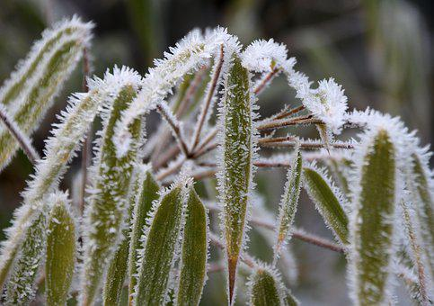Frozen, Frost, Iced, Reed, Incomplete, Cold, Winter
