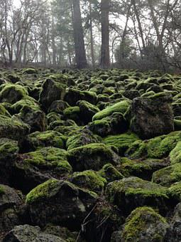 Moss, Wintergreen, Green Stones