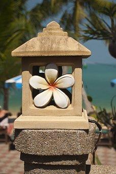 Thailand, Flower, Plumeria, Summer, Vacation