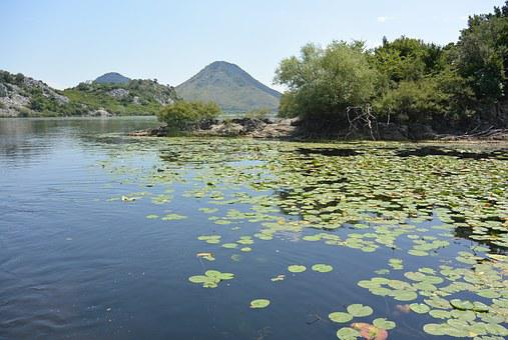 Skadar Lake, Montenegro, Journey, Cruise, Water