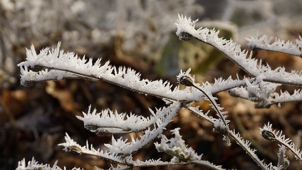 Flower, Seeds, Winter, Ice, Snow, Crystal, Frost, Cold