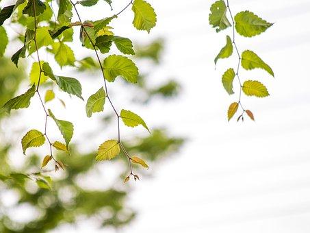 Landscape Trees, Leaf, Summer, Branch, Section