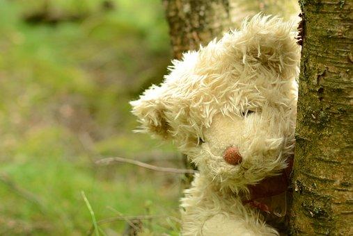 Teddy, Bear, Teddy Bear, Animal, Stuffed, Fur, Sweet