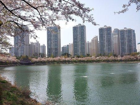 Seokchon Lake, Lake Palace, Spring, Beoc Flowers
