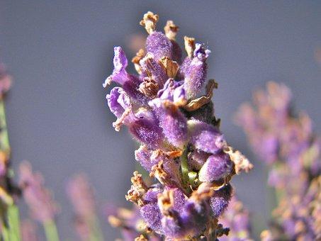 Flower, Nahaunahme, Garden, Flowers, Flora, Macro