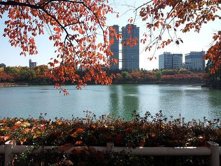 Seokchon Lake, Lake Palace, Autumn, Autumn Leaves, Lake