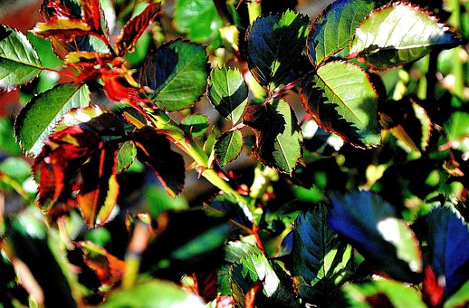 Thorns, Branches, Section, Leaves, Spring, Plant