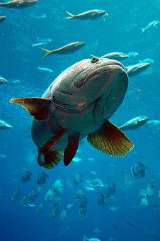 Aquarium, Grouper, Fish, Tropical, Underwater, Marine
