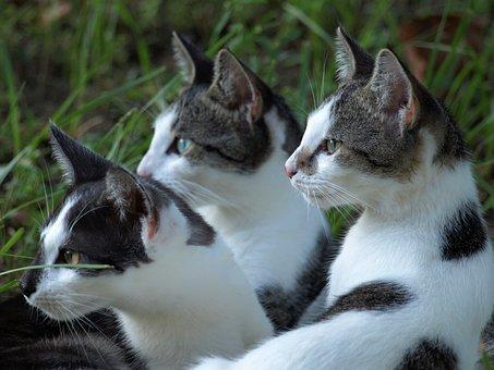 Cats, Pets, Group, Ears, Grass, Alert, Cute, Fluffy