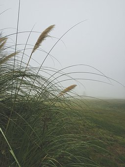 Fog, Grass, Weeds, Mist, Season, Green, Foggy, Day