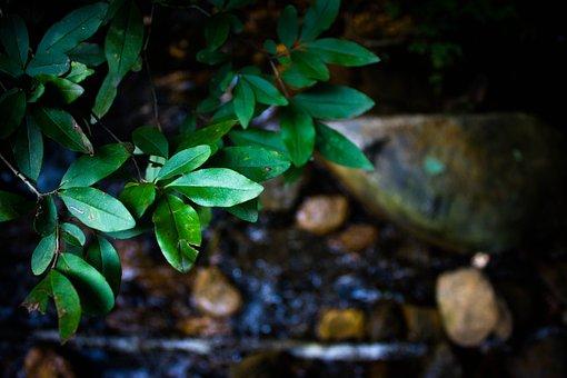 Plant, Du Gou, Water, Natural Landscape, The Leaves