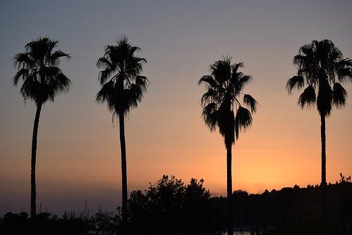 Sunset, Palms, Summer, Croatia, Hvar, Sea, Tourism