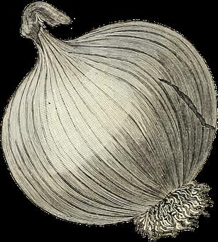 Onion, Vegetable, Transparent, Sepia, Roses, Veggies