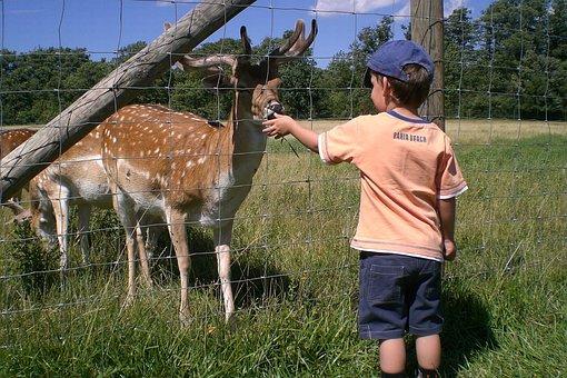 Boy, Roe Deer, Feed, Child, Animal, Nutrition, Cute