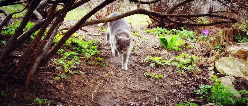 Animal, Cat, Homemade, Domestic Cat
