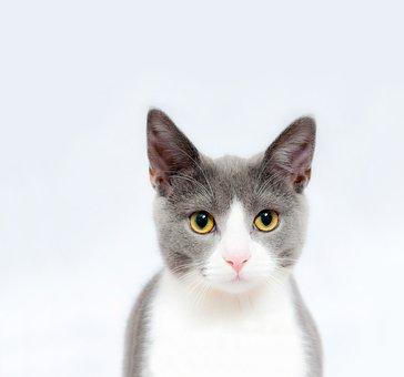 Cat, Feline, Pet, Animal, Cute, Domestic, Mammal, Fur