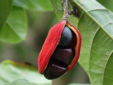 Frequency Po, Fruit Fact, To Eat, Dou Jia