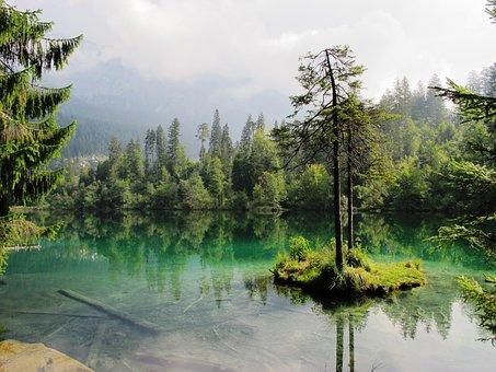 Lake, Nature, Mood, Fir, Forest, Island, Lake Cresta
