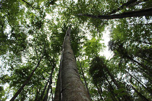 Tree, Crown, Log, Green, Forest, Nature, Frisch, Air