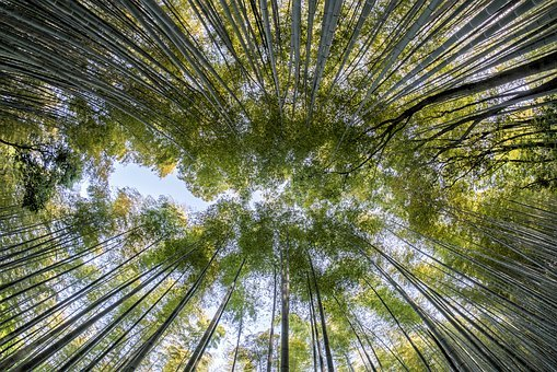 Bamboo, Forest, Nature, Green, Natural, Tree, Asia