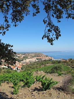 Vine, Sea, Ocean, Landscape