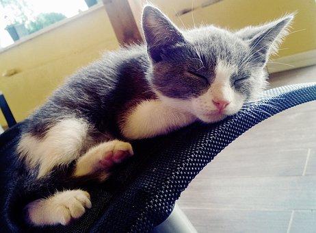 Cat, Kitten, Gatta, Pussy Cat, Puppy, Feline, Malai