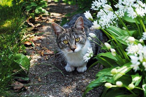 Cat, Garden, Pet, Animal, Cute, Staring, Nature, Fluffy