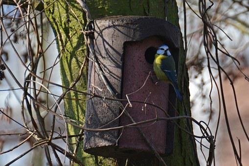 Blue Tit, Tit, Bird, Feather, Aviary, Nature, Feed