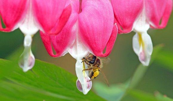 Bee With Heart, Little Sandy Bee, Bleeding Heart