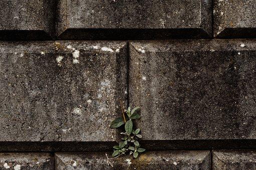 Wall, Musten, Plant, Leaf, Bricks
