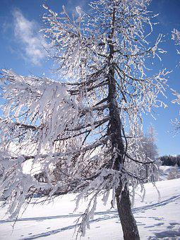 Snow, Winter, Cold, Wintry, Winter Tree