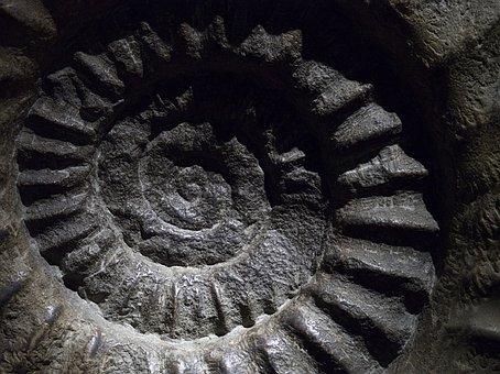 Ammonite, Fossil, Shell, Mollusc, Marine, Creature